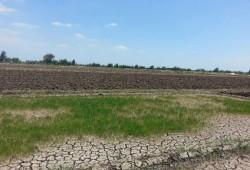 آثار سد النهضة: نقص مياه الري تتسبب في بوار أراصي الرحمانية بالبحيرة